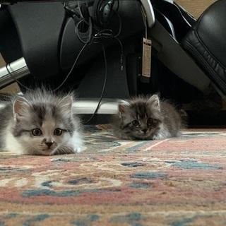 生後2ヶ月〜3ヶ月 - 猫
