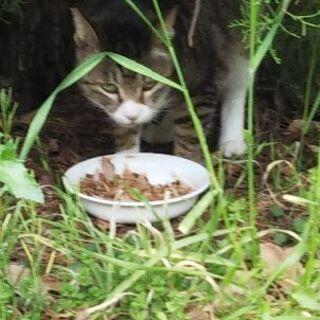 迷子猫の情報をお願いします。