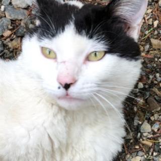 可愛い若いオス猫、家族募集です