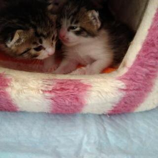 母猫と子猫達決まりました。