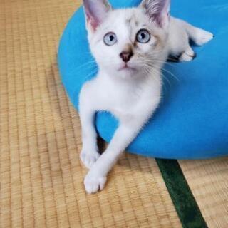 至急☆ 保護ネコ 生後約3ヶ月 オス (写真更新6月28日)