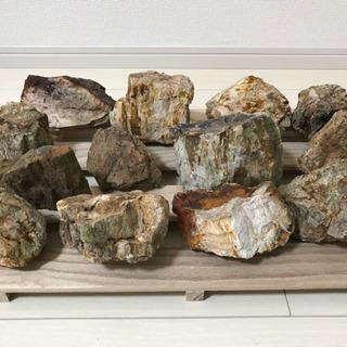 木化石 10キロ