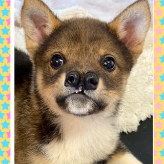 ✨生後3カ月位の子犬✨ 里親様決定