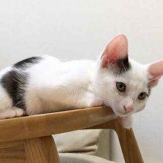 7月4日(土)お見合い会子猫シーズンセカンド💓に出します。…