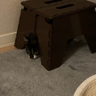 最後3ヶ月の子猫です。