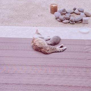 可愛そうな親子を温かいお家に迎えてください − 福岡県