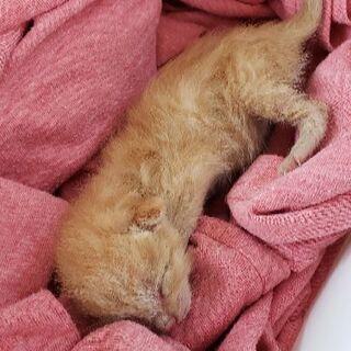 生後10日程の子猫