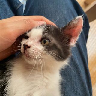 生後2か月くらいの子猫 里親募集