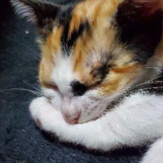 里親3匹決まりました☆生後5ヶ月の子猫ちゃん