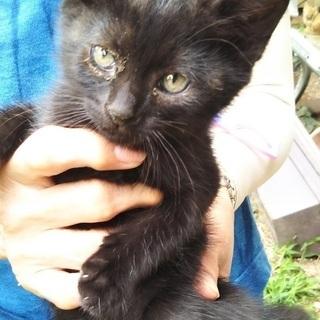 【至急】黒い子猫里親募集