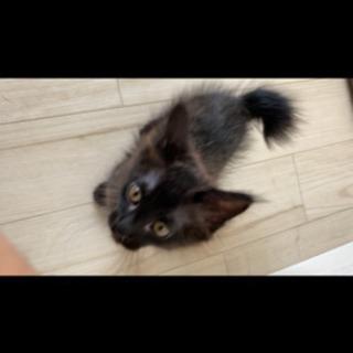黒猫3ヶ月ぐらい