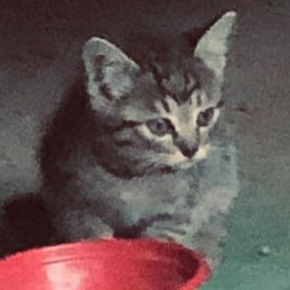 子猫1匹里親募集