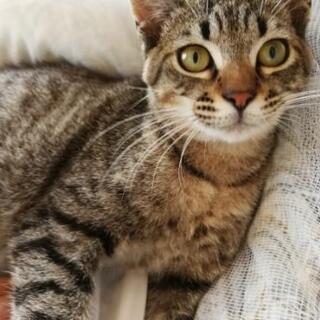 【トライアル中】保護猫の里親になってくれる方