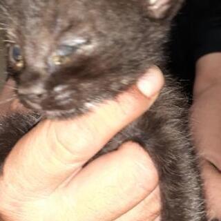 子猫生後約1ヶ月