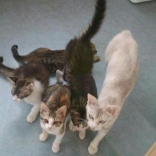 5月生まれ、仲良し姉妹の里親募集です。 - 猫