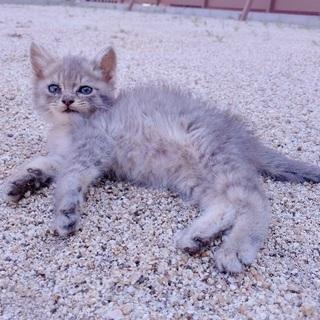 可愛そうな親子を温かいお家に迎えてください - 猫