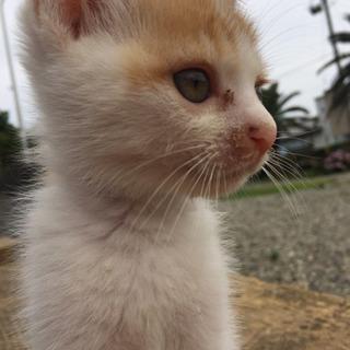 どうか小さな小さな命を助けてください(子猫)