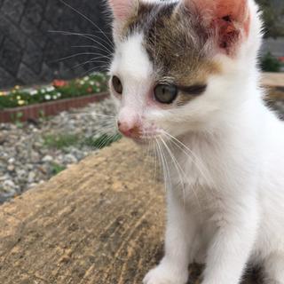 小さな命を助けてください(子猫)