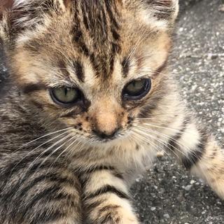 どうか小さな命を助けてください(子猫)の画像