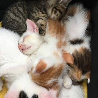 どうか小さな命を助けてください(子猫) − 三重県