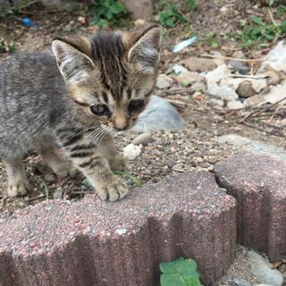 どうか小さな命を助けてください(子猫) - 猫