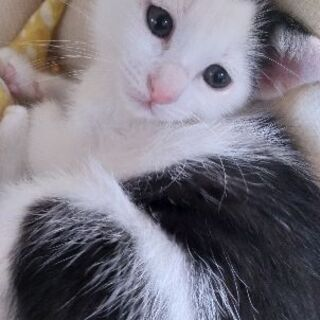 子猫兄妹2匹