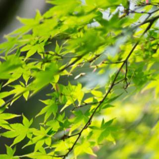 庭木(植木)の剪定・管理などをご予算、ご希望に添ってお応え致します
