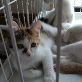 可愛い三毛猫姉妹