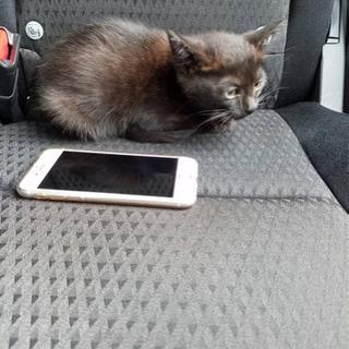 黒ネコ(生後2ヶ月程度)里親募集します。