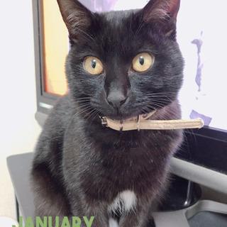 黒猫 2歳 メス (只今交渉中)