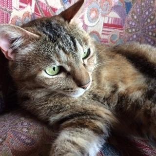 馴れると甘々💕な元野良猫💕
