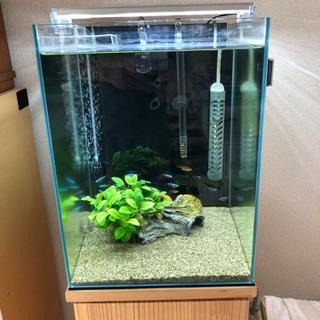 熱帯魚と水槽、LED照明を差し上げます。