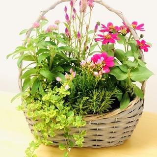 【8/23(日)が最終日です!】寄せ植え&多肉植物他 屋外販売!...