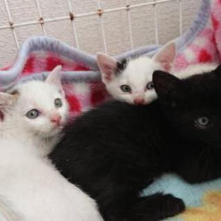 里親募集 黒猫 子猫 保護猫