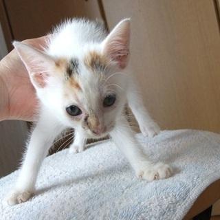 生後1ヶ月位の子猫9匹里親募集 - 猫