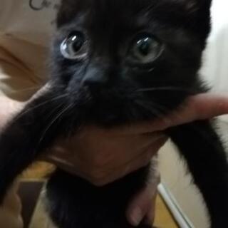 可愛い黒猫☆保護猫