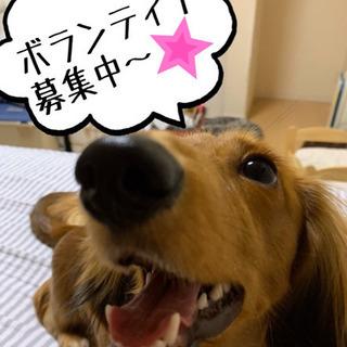 犬の保護活動☆ボランティア募集
