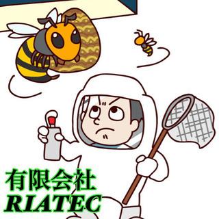蜂の巣駆除!プロにお任せ!