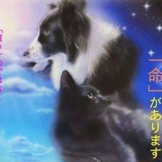 過酷な環境から保護したまだ幼く臆病なサバ白君♡僕と家族になってください🍀 - 猫