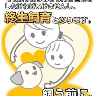 過酷な環境から保護したまだ幼く臆病なサバ白君♡僕と家族になってください🍀 − 東京都