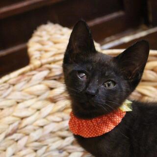 片目に障害が残りましたが超甘えん坊なストーカー猫のPayPay君
