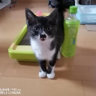 保護猫 2ヶ月くらい 女の子👧