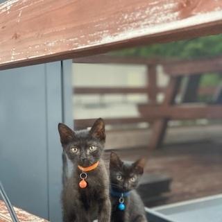 子猫 ♀2匹 ♂1匹