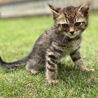 雄の虎猫です