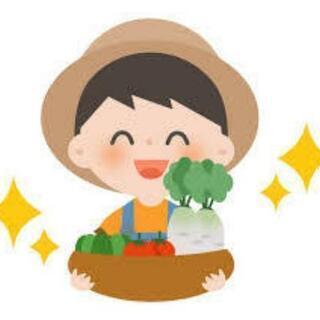農作業のお手伝いさせてください🙇(ボランティア)