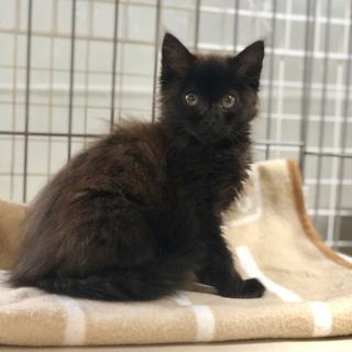No.7 長毛の黒猫