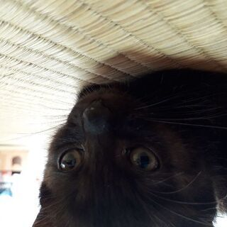 ふわもこ鍵尻尾!くまみたいな猫ちゃんです。 - 猫