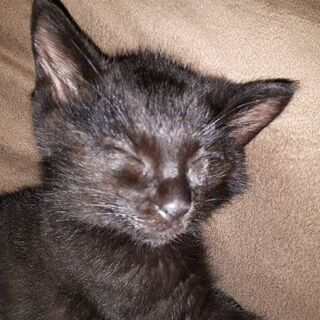 ふわもこ鍵尻尾!くまみたいな猫ちゃんです。