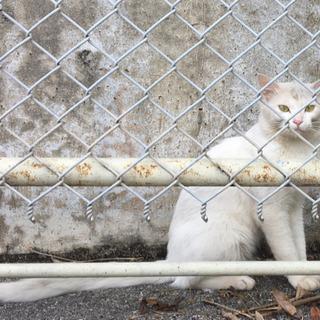 🍀里親募集🍀1歳くらい〜のとても可愛らしい真っ白な猫*寂しそうに...