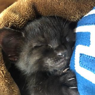3.15生まれ黒猫ちゃん